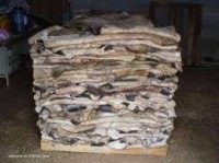 Wet/Dry Salted Donkey Hides