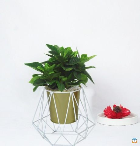 Metal flower stand with gold pot