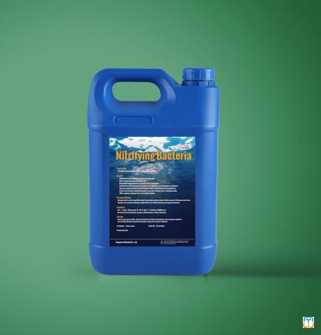 Nitrifying bacteria to quick start up and recovery nitrification process for effluent treatment